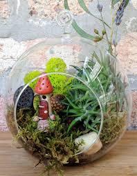 Decorative Plants For Home Download Terrarium Plants For Sale Online Solidaria Garden