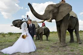 exotic animals exotic animals are the new wedding trend in 2015 arabia weddings