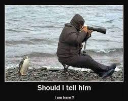 Photographer Meme - a wildlife photographer viral viral videos