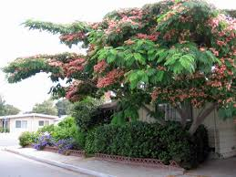 permaculture plants silk tree temperate climate