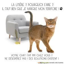 mon fait pipi sur le canapé mon fait pipi partout conseils vétérinaires illustrés catedog