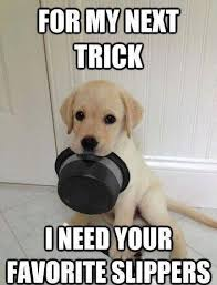 Cute Puppies Meme - top 79 funny and cute puppies memes funny dogs pinterest memes