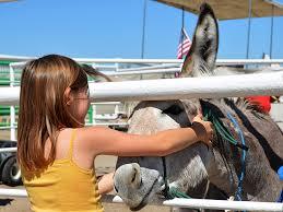 mustang adoptions programs and burro adoption and sales adoption and