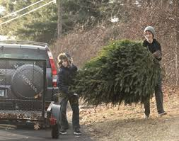 brookfield boy scouts collect trees around town newstimes