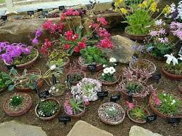 Rock Garden Plants Uk Rock Garden Plants Uk Alpine House Rock Garden Plants For Sale Uk