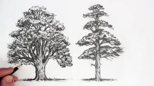 White Oak Tree Drawing How To Draw Trees Youtube