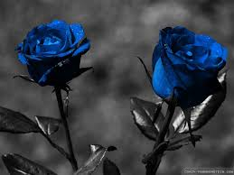 wallpaper u0027s collection blue roses wallpapers