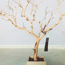 necklace holder stand images 30 all natural tree jewelry holder jewelry organizer jpg