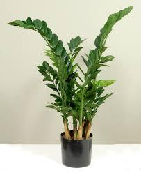 office plant artificial plants plantforce office plants london