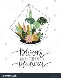 hand drawn contained tropical house plants stock vector 578152645