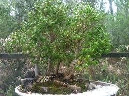 why i bonsai provocative christian living