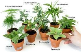 plante bureau plante bureau une aide with plante bureau stunning petit plante