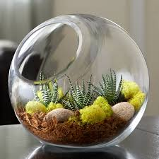 large circle terrarium