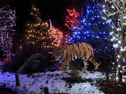 columbus zoo christmas lights christmas lights at the columbus zoo in ohio travelsofad flickr