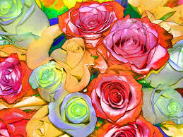 colorful roses colorful roses background free stock photo domain pictures
