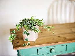 plante de chambre 5 plantes d intérieur pour décorer la chambre à coucher et nous