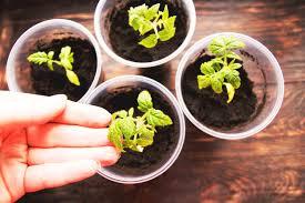 how to create your very own indoor garden onefold uk