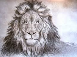lion drawing giraffe pinterest lion drawing lions and drawings