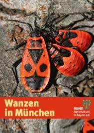 wanzen nabu wanzen bund naturschutz kreisgruppe münchen