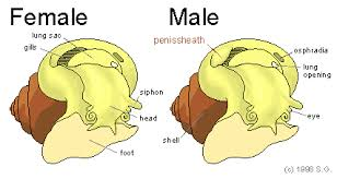 Anatomy Difference Between Male And Female Reproduction
