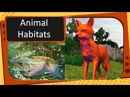 science types of animal habitat english youtube