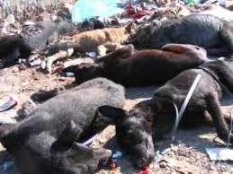 dog euthanasia romania say no to euthanasia dogs right to live is not for us