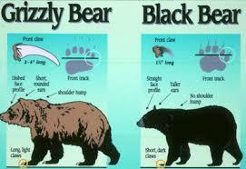 Bears Montana Hunting And Fishing - flathead national forest home