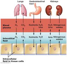 body fluids anatomy u0026 physiology