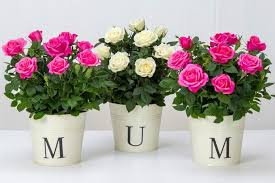 mothers day flower what happens if couriers ruin your mother s day flowers your