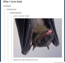 why i love bats meme collection