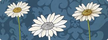 how to draw flowers the innocent and cheerful daisy