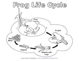 frog life cycle worksheet for kindergarten the best and most