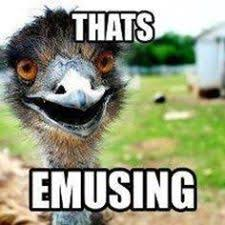 Ostrich Meme - no police report lodged on runaway ostrich in kl the rakyat post