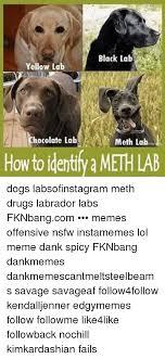 Chocolate Lab Meme - 25 best memes about meth lab dog meth lab dog memes