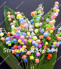 of the valley flower free ship of the valley flower seeds rainbow bell orchid