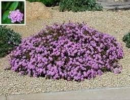 Flowers For Backyard by Best 25 Desert Plants Ideas On Pinterest Desert Landscaping