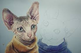 sphynx sweaters sphynx cats in sweaters wip by straewefin on deviantart
