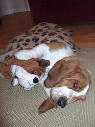 repulsif chien canapé magnifique repulsif chien canape meubles les 74 meilleures images du