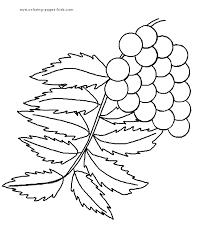 leaf color page