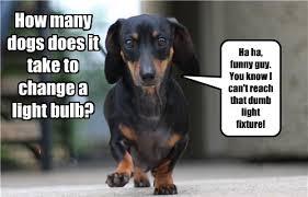 Wiener Dog Meme - looks like we got a real wiener here i mean winner i has a