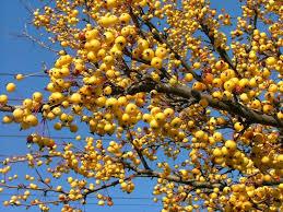 56 best tree sale april 24 26 2015 images on garden