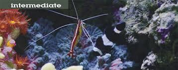 Saltwater Aquascaping Aquascaping Saltwater Aquariums Choosing Artificial Corals