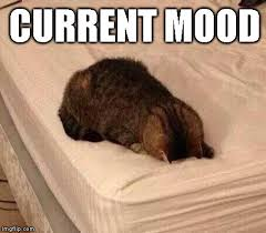 Mood Meme - image tagged in current mood cats imgflip
