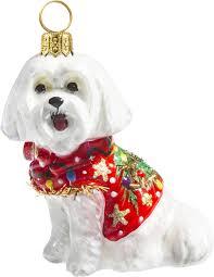 maltese in ugly christmas sweater maltese diva dogs