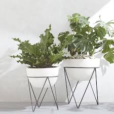 how to make your plants happy apartment 34 ivy plants and gardens