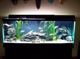 freshwater fish aquarium decorations design ideas fish