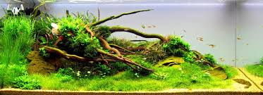 Plants For Aquascaping Nutrients For A Planted Tank Aqua Rebell