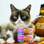 2018 happy thanksgiving grumpy cat images related to
