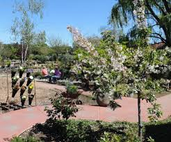 Flower Farm Loomis - grants bring native water wise plants to flower farm nursery the
