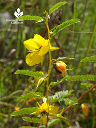 alabama native plants wild about wildlife native plants all year central texas gardener